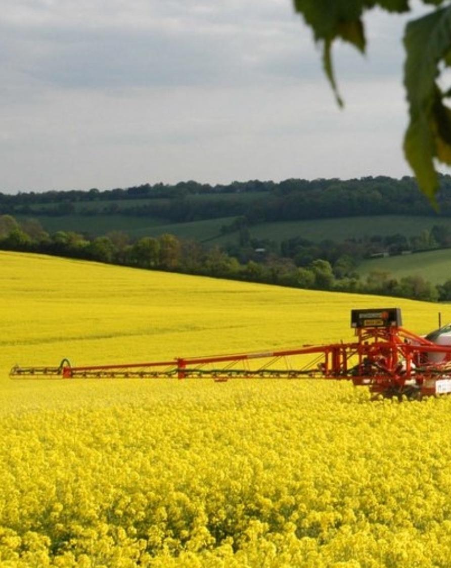 Yellow crop fields